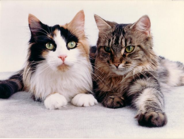 katzen und der sommer hitze cattalk das katzen forum. Black Bedroom Furniture Sets. Home Design Ideas